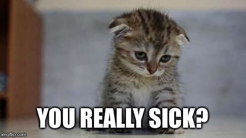 Sad kitten | YOU REALLY SICK? | image tagged in sad kitten | made w/ Imgflip meme maker