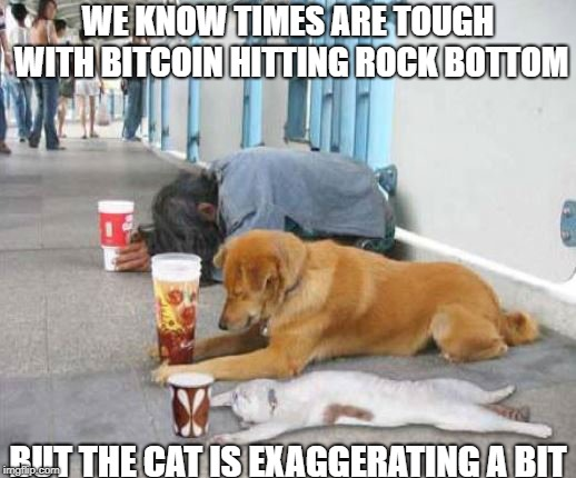 bitcoin slump | WE KNOW TIMES ARE TOUGH WITH BITCOIN HITTING ROCK BOTTOM BUT THE CAT IS EXAGGERATING A BIT | image tagged in poor,bitcoin fail,beggers | made w/ Imgflip meme maker