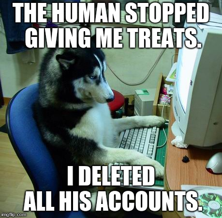 I Have No Idea What I Am Doing | THE HUMAN STOPPED GIVING ME TREATS. I DELETED ALL HIS ACCOUNTS. | image tagged in memes,i have no idea what i am doing | made w/ Imgflip meme maker