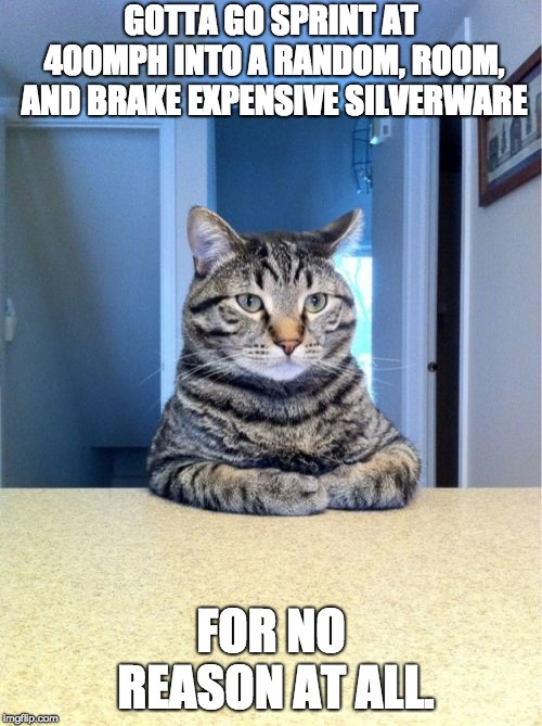 Take A Seat Cat | GOTTA GO SPRINT AT 400MPH INTO A RANDOM, ROOM, AND BRAKE EXPENSIVE SILVERWARE FOR NO REASON AT ALL. | image tagged in memes,take a seat cat | made w/ Imgflip meme maker