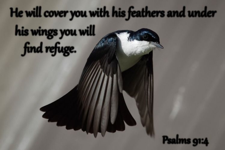 Psalms 91:4 He Will Cover You With His Feathers And Under His Wings You Will Find Refuge | He will cover you with his feathers and under Psalms 91:4 his wings you will find refuge. | image tagged in bible,holy bible,holy spirit,bible verse,verse,god | made w/ Imgflip meme maker