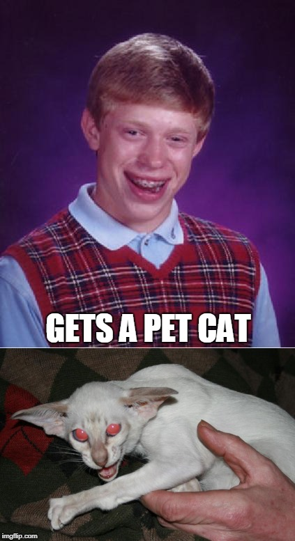 Here, Kitty, Kitty! Here, Kitty, Kitty, Kitty! AUGGH MY FACE! | GETS A PET CAT | image tagged in memes,bad luck brian,bad luck brian nerdy,pets,cat,caturday | made w/ Imgflip meme maker