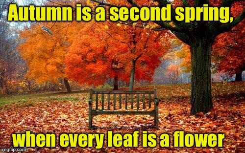 My favorite time of year | Autumn is a second spring, when every leaf is a flower | image tagged in autumn,beauty,colorful | made w/ Imgflip meme maker