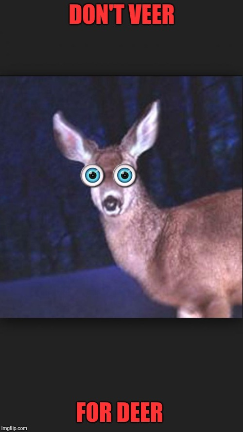 deer in headlights | DON'T VEER FOR DEER | image tagged in deer in headlights | made w/ Imgflip meme maker