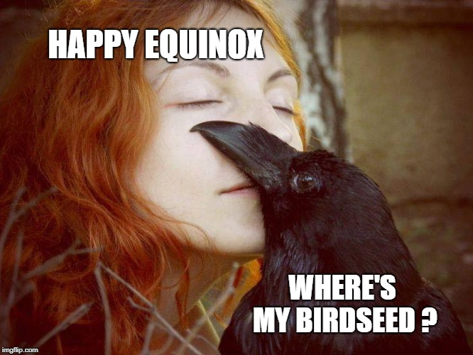 HAPPY EQUINOX WHERE'S MY BIRDSEED ? | image tagged in equinox,autumn,bird,hangry,fall,seasons | made w/ Imgflip meme maker