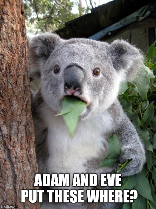 Surprised Koala | ADAM AND EVE PUT THESE WHERE? | image tagged in memes,surprised koala | made w/ Imgflip meme maker