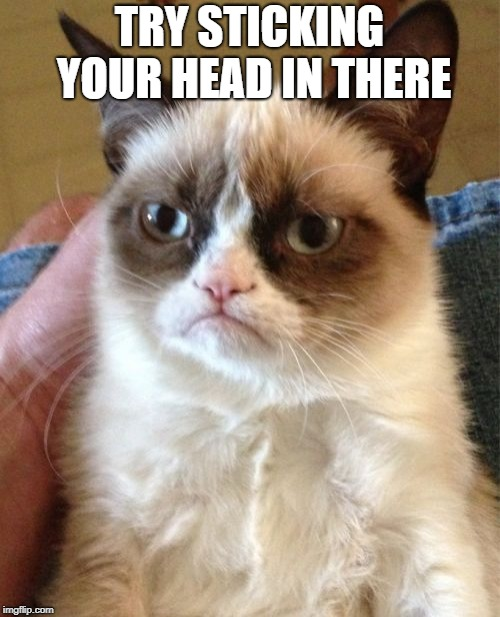 Grumpy Cat Meme | TRY STICKING YOUR HEAD IN THERE | image tagged in memes,grumpy cat | made w/ Imgflip meme maker