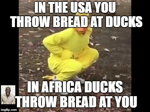 Poetry | IN THE USA YOU THROW BREAD AT DUCKS IN AFRICA DUCKS THROW BREAD AT YOU | image tagged in ducks,poetry,be amazed | made w/ Imgflip meme maker