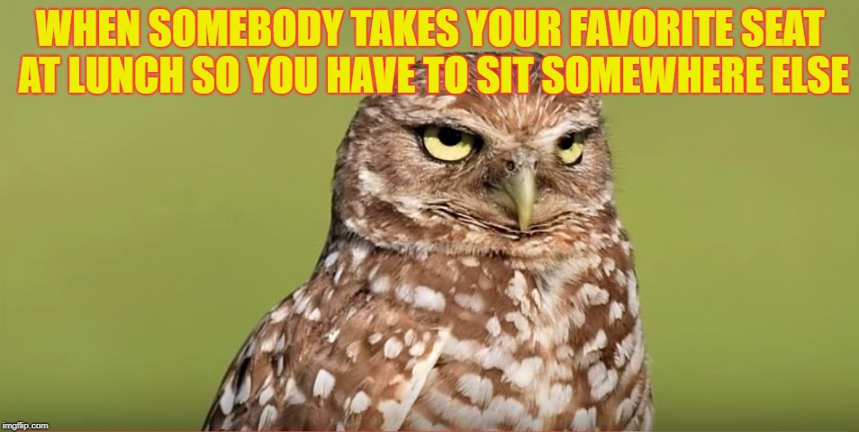 I hate when this happens to me | WHEN SOMEBODY TAKES YOUR FAVORITE SEAT AT LUNCH SO YOU HAVE TO SIT SOMEWHERE ELSE | image tagged in death stare owl,memes,funny,doctordoomsday180,lunch,animals | made w/ Imgflip meme maker