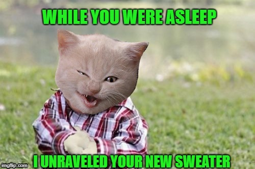 Evil kitten | WHILE YOU WERE ASLEEP I UNRAVELED YOUR NEW SWEATER | image tagged in funny memes,cat,evil toddler,kitten | made w/ Imgflip meme maker