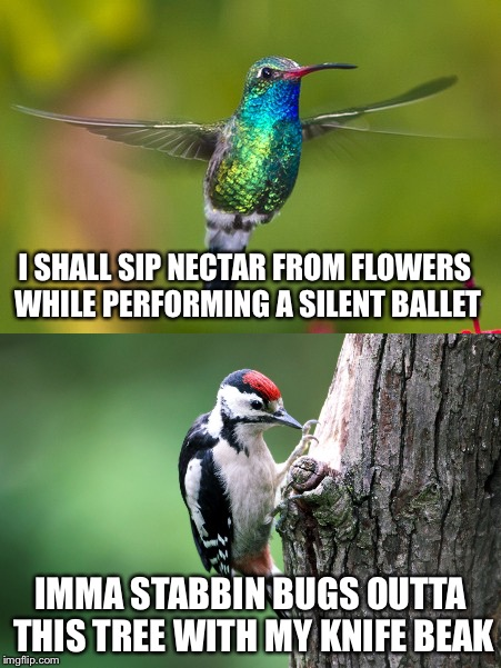 Hummingbirds and woodpeckers | I SHALL SIP NECTAR FROM FLOWERS WHILE PERFORMING A SILENT BALLET IMMA STABBIN BUGS OUTTA THIS TREE WITH MY KNIFE BEAK | image tagged in hummingbird,woodpecker,ballet,bugs,memes | made w/ Imgflip meme maker