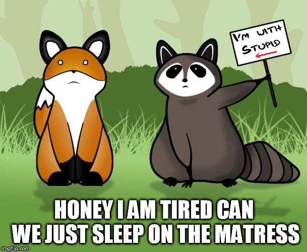 stupid | HONEY I AM TIRED CAN WE JUST SLEEP ON THE MATRESS | image tagged in stupid | made w/ Imgflip meme maker