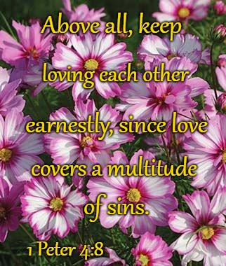 1 Peter 4:8 Above All, Keep Loving Each Other | Above all, keep 1 Peter 4:8 loving each other earnestly, since love covers a multitude of sins. | image tagged in bible,holy bible,holy spirit,bible verse,verse,god | made w/ Imgflip meme maker
