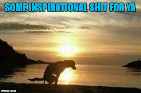 I thought it was time to post something inspirational...LOL |  SOME INSPIRATIONAL SHIT FOR YA | image tagged in sunsets,memes,dogs,funny,inspiration,animals | made w/ Imgflip meme maker