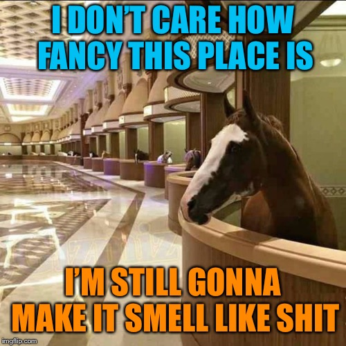 Horse Sense | I DON'T CARE HOW FANCY THIS PLACE IS I'M STILL GONNA MAKE IT SMELL LIKE SHIT | image tagged in horse,shit,stinky,funny,memes,funny memes | made w/ Imgflip meme maker