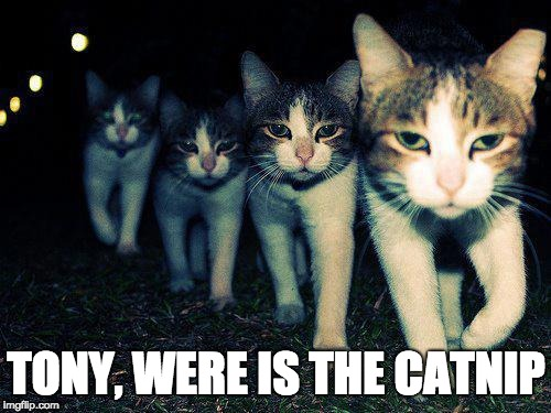 Wrong Neighboorhood Cats | TONY, WERE IS THE CATNIP | image tagged in memes,wrong neighboorhood cats | made w/ Imgflip meme maker