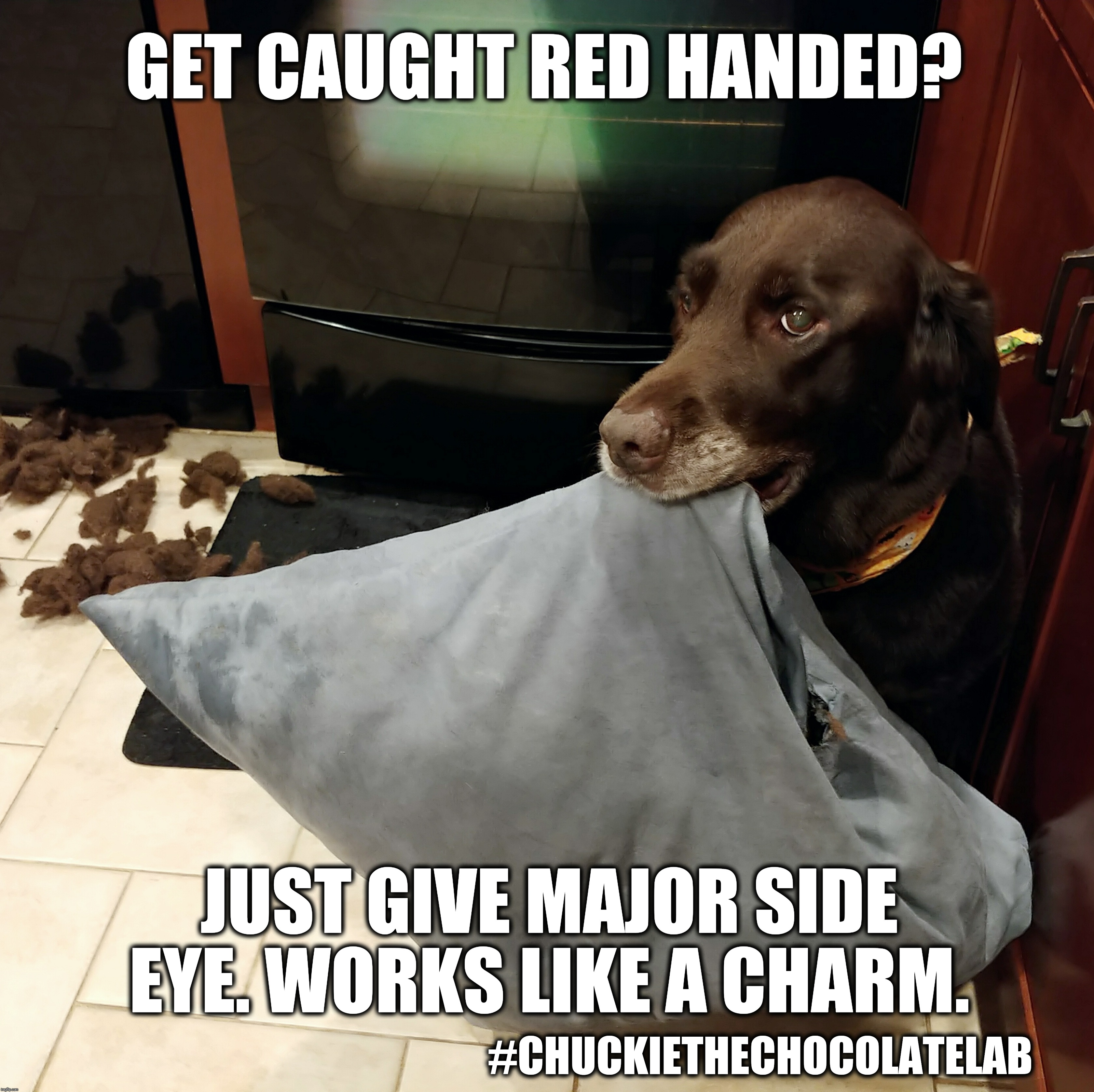 Dog side eye | GET CAUGHT RED HANDED? #CHUCKIETHECHOCOLATELAB JUST GIVE MAJOR SIDE EYE. WORKS LIKE A CHARM. | image tagged in chuckie the chocolate lab,side eye,funny,dogs,memes,labrador | made w/ Imgflip meme maker