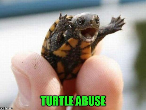 happy baby turtle | TURTLE ABUSE | image tagged in happy baby turtle | made w/ Imgflip meme maker