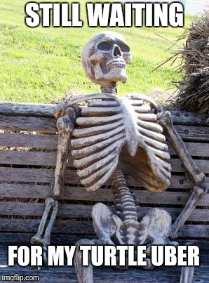 Waiting Skeleton Meme | STILL WAITING FOR MY TURTLE UBER | image tagged in memes,waiting skeleton | made w/ Imgflip meme maker