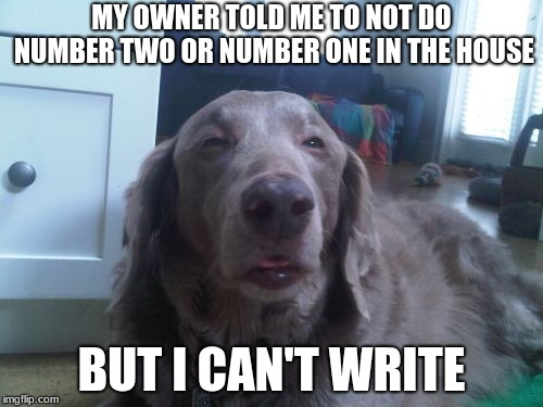 High Dog | MY OWNER TOLD ME TO NOT DO NUMBER TWO OR NUMBER ONE IN THE HOUSE BUT I CAN'T WRITE | image tagged in memes,high dog | made w/ Imgflip meme maker