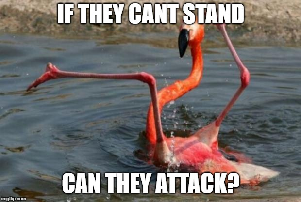 Flamingo Fail | IF THEY CANT STAND CAN THEY ATTACK? | image tagged in flamingo fail | made w/ Imgflip meme maker