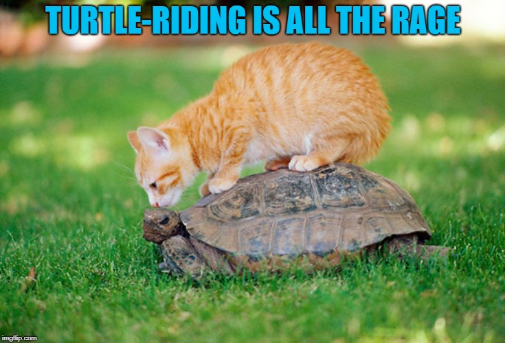 TURTLE-RIDING IS ALL THE RAGE | made w/ Imgflip meme maker