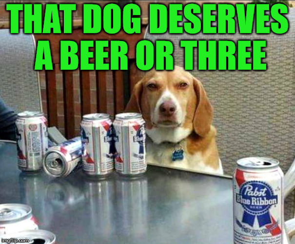 beer dog | THAT DOG DESERVES A BEER OR THREE | image tagged in beer dog | made w/ Imgflip meme maker