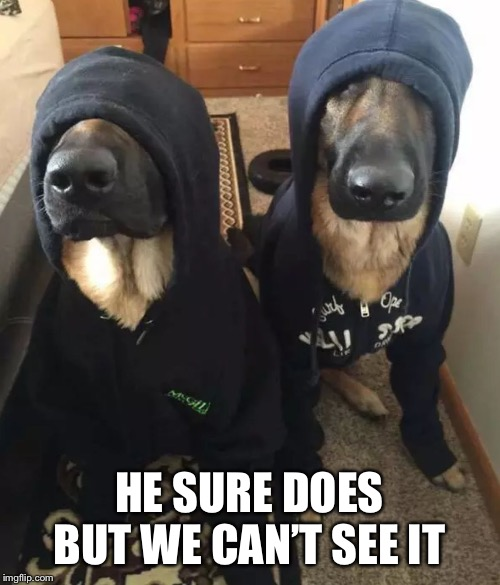 k9 undercover | HE SURE DOES BUT WE CAN'T SEE IT | image tagged in k9 undercover | made w/ Imgflip meme maker