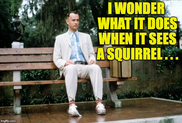 Forrest Gump | I WONDER WHAT IT DOES WHEN IT SEES A SQUIRREL . . . | image tagged in forrest gump | made w/ Imgflip meme maker