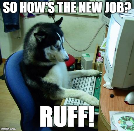I Have No Idea What I Am Doing Meme | SO HOW'S THE NEW JOB? RUFF! | image tagged in memes,i have no idea what i am doing | made w/ Imgflip meme maker