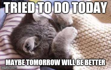 sick cat | TRIED TO DO TODAY MAYBE TOMORROW WILL BE BETTER | image tagged in sick cat | made w/ Imgflip meme maker