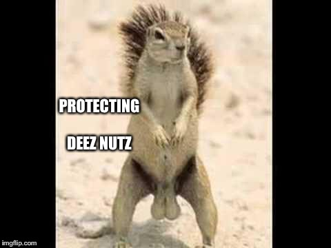 Squirrel nuts | PROTECTING DEEZ NUTZ | image tagged in squirrel nuts | made w/ Imgflip meme maker