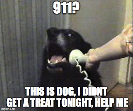 Kudos to kubra_kiel for this! | 911? THIS IS DOG, I DIDNT GET A TREAT TONIGHT, HELP ME | image tagged in yes this is dog,911,punman21,kubra_kiel | made w/ Imgflip meme maker