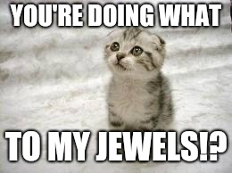Told about a little kitty operation | YOU'RE DOING WHAT TO MY JEWELS!? | image tagged in memes,sad cat | made w/ Imgflip meme maker
