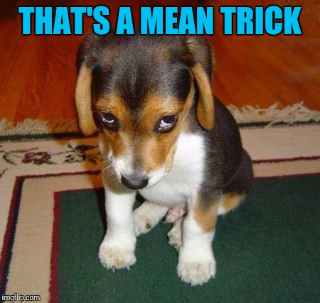 Sad puppy | THAT'S A MEAN TRICK | image tagged in sad puppy | made w/ Imgflip meme maker