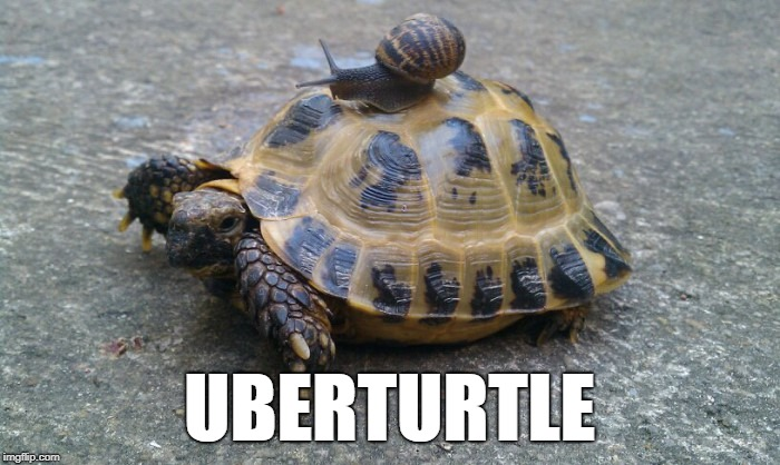 Snail riding turtle | UBERTURTLE | image tagged in snail riding turtle,uber,snail,turtle | made w/ Imgflip meme maker