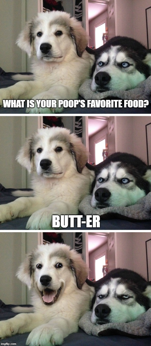Bad pun dogs | WHAT IS YOUR POOP'S FAVORITE FOOD? BUTT-ER | image tagged in bad pun dogs,butts,poop,food,butter | made w/ Imgflip meme maker