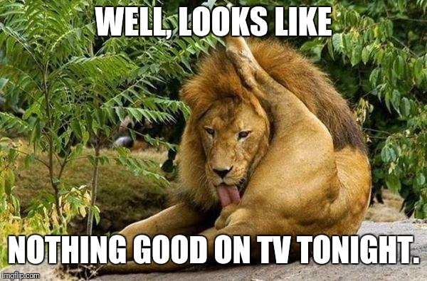 lion licking balls | WELL, LOOKS LIKE NOTHING GOOD ON TV TONIGHT. | image tagged in lion licking balls | made w/ Imgflip meme maker