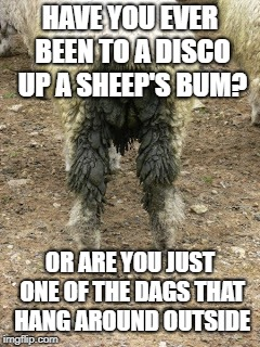 HAVE YOU EVER BEEN TO A DISCO UP A SHEEP'S BUM? OR ARE YOU JUST ONE OF THE DAGS THAT HANG AROUND OUTSIDE | made w/ Imgflip meme maker