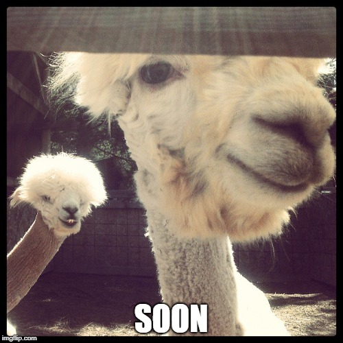 Alpaca soon | SOON | image tagged in alpaca soon | made w/ Imgflip meme maker
