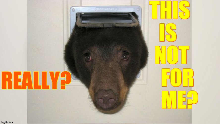 An Interesting Place To Be | THIS IS    NOT     FOR     ME? REALLY? | image tagged in memes,bear,head,in,doggy,door | made w/ Imgflip meme maker