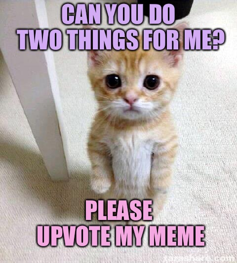 Cute Cat |  CAN YOU DO TWO THINGS FOR ME? AND IMPEACH TRUMP; PLEASE UPVOTE MY MEME | image tagged in memes,cute cat | made w/ Imgflip meme maker