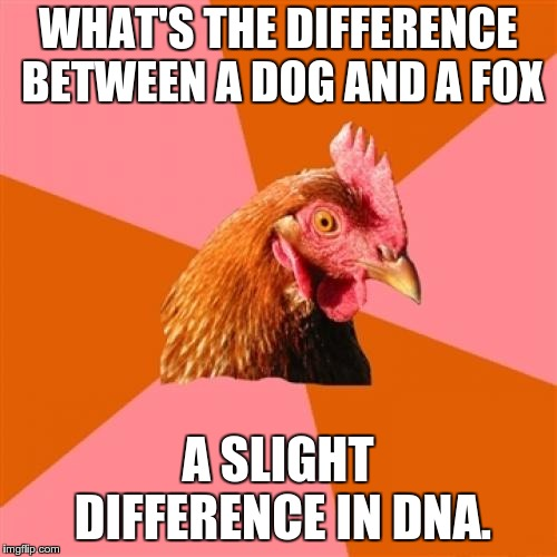 Anti Joke Chicken Meme | WHAT'S THE DIFFERENCE BETWEEN A DOG AND A FOX A SLIGHT DIFFERENCE IN DNA. | image tagged in memes,anti joke chicken | made w/ Imgflip meme maker