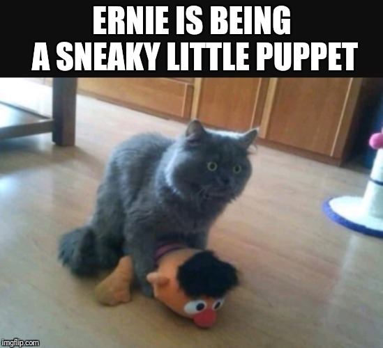 What if BERT finds out  |  ERNIE IS BEING A SNEAKY LITTLE PUPPET | image tagged in memes,bert and ernie,funny | made w/ Imgflip meme maker