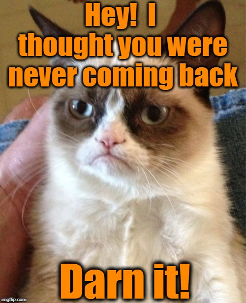 Grumpy Cat Meme | Hey!  I thought you were never coming back Darn it! | image tagged in memes,grumpy cat | made w/ Imgflip meme maker