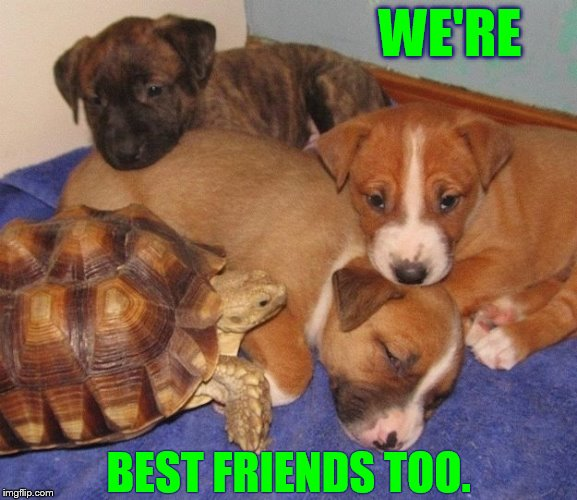 WE'RE BEST FRIENDS TOO. | made w/ Imgflip meme maker