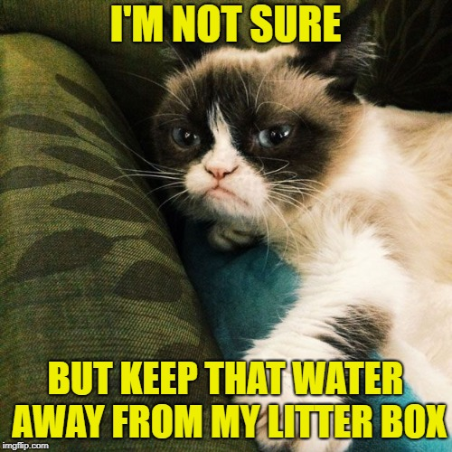 I'M NOT SURE BUT KEEP THAT WATER AWAY FROM MY LITTER BOX | made w/ Imgflip meme maker