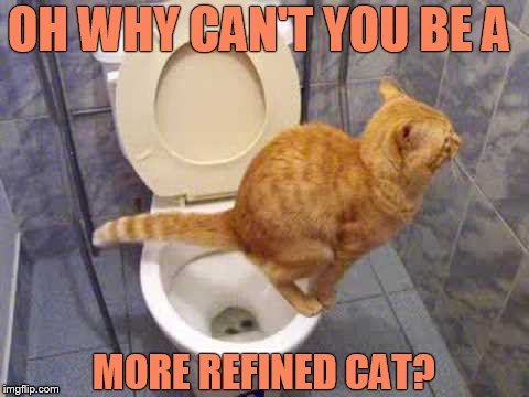 OH WHY CAN'T YOU BE A MORE REFINED CAT? | made w/ Imgflip meme maker