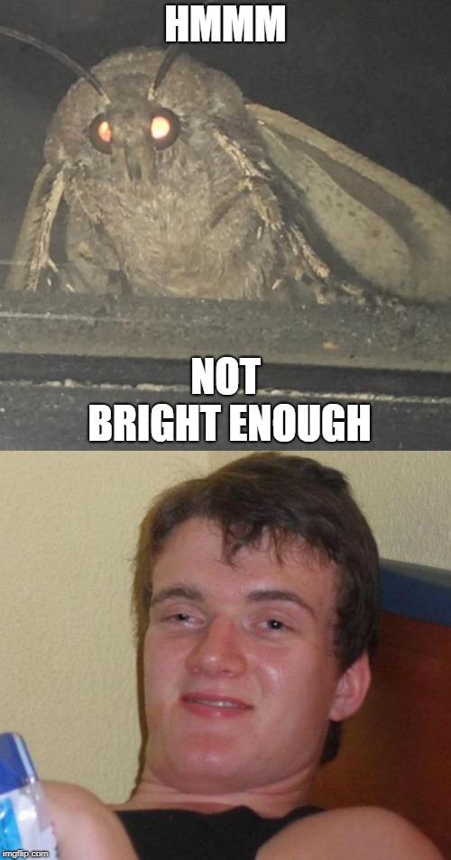 couldn't attract a moth | HMMM NOT BRIGHT ENOUGH | image tagged in moth,10 guy | made w/ Imgflip meme maker