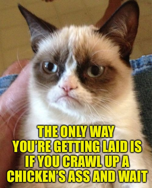 Dirty Meme Week, Sep. 24 - Sep. 30, a socrates event! | THE ONLY WAY YOU'RE GETTING LAID IS IF YOU CRAWL UP A CHICKEN'S ASS AND WAIT | image tagged in memes,grumpy cat,dirty meme week,which came first | made w/ Imgflip meme maker